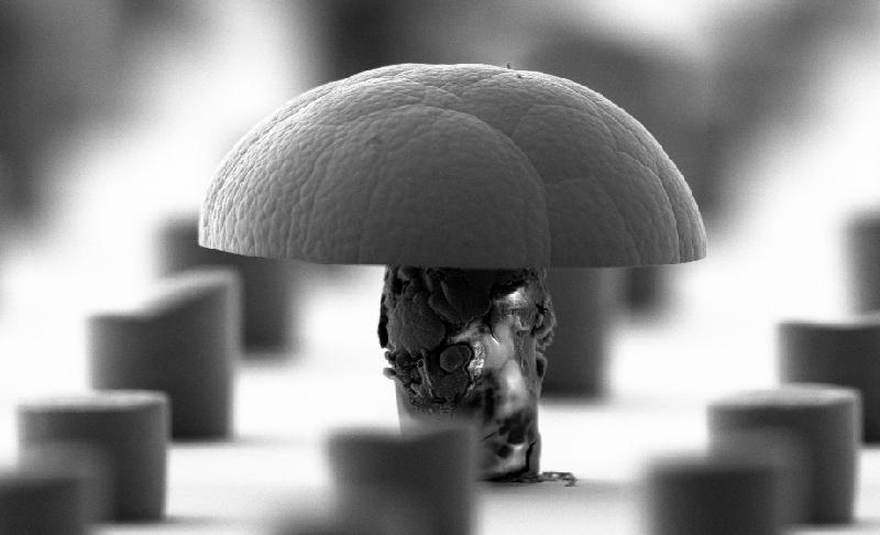 Masked Mushroom
